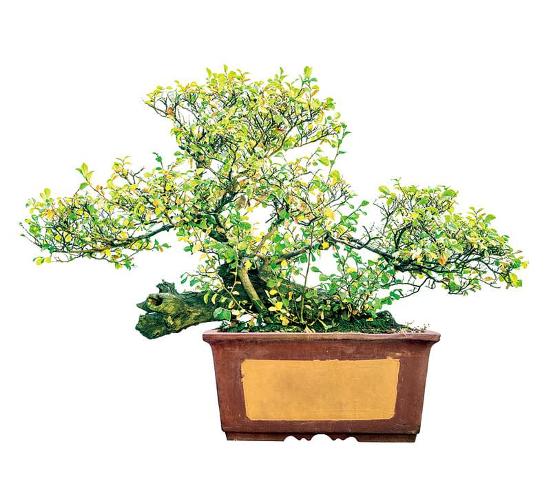 日本飄浮盆栽 好療癒