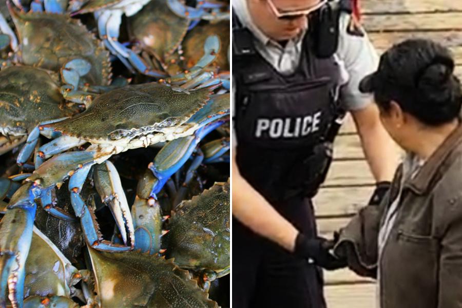 活拔蟹腿後把蟹扔回海 華人大媽被加國罰款