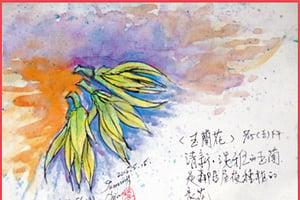 彩繪生活(329)玉蘭花