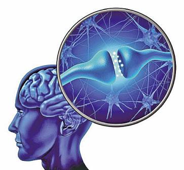美國研究團隊証實,可以將健康成年人的皮膚細胞直接轉化為運動神經元,而不需要經歷幹細胞狀態。(網絡圖片)