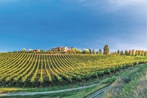 新秀酒園Mirabel Vineyards