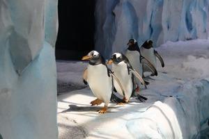 「上萬企鵝空降南通」 市民帶羽絨服到場驚呆