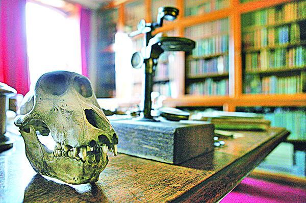 達爾文窮其一生,仍無法解釋「寒武紀生物大爆炸」與「人類起源」兩大疑點。圖為達爾文故居展示的動物頭骨。(AFP)