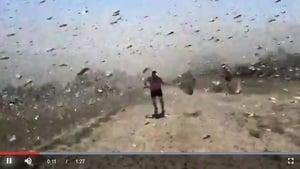 俄羅斯蝗蟲如沙塵暴 用網子隨便撈就一堆