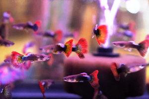 魚有感情和性格差異 科學家驚訝