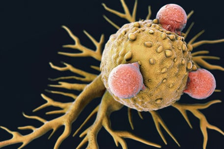 脊髓灰質炎病毒可激活針對腫瘤細胞的固有機體炎症反應系統。(網絡圖片)