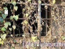 十九大前 上海當局抓家屬當人質逼出訪民