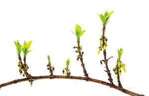 種子和新芽的祝福