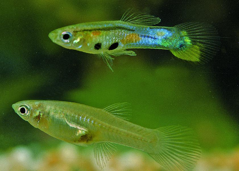 魚有感情和性格差異 令科學家驚訝