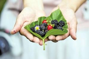 養生很簡單 3種水果補肝腎
