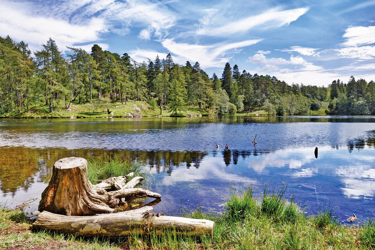 湖邊綠意盎然 (fotolia)