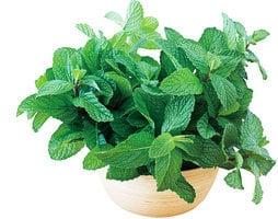 栽種4種植物 消炎降糖又抗癌