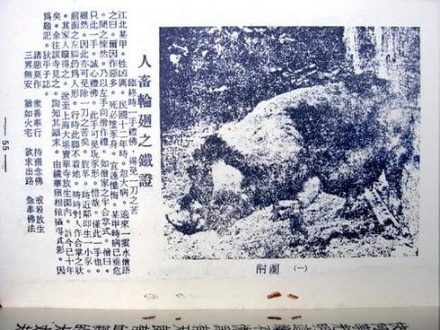 民國時期一個作惡多端的人轉生為豬的故事當時被媒體報道出來。(網絡圖片)