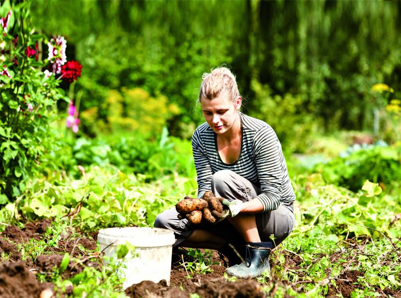 5種廚餘留給花草當堆肥
