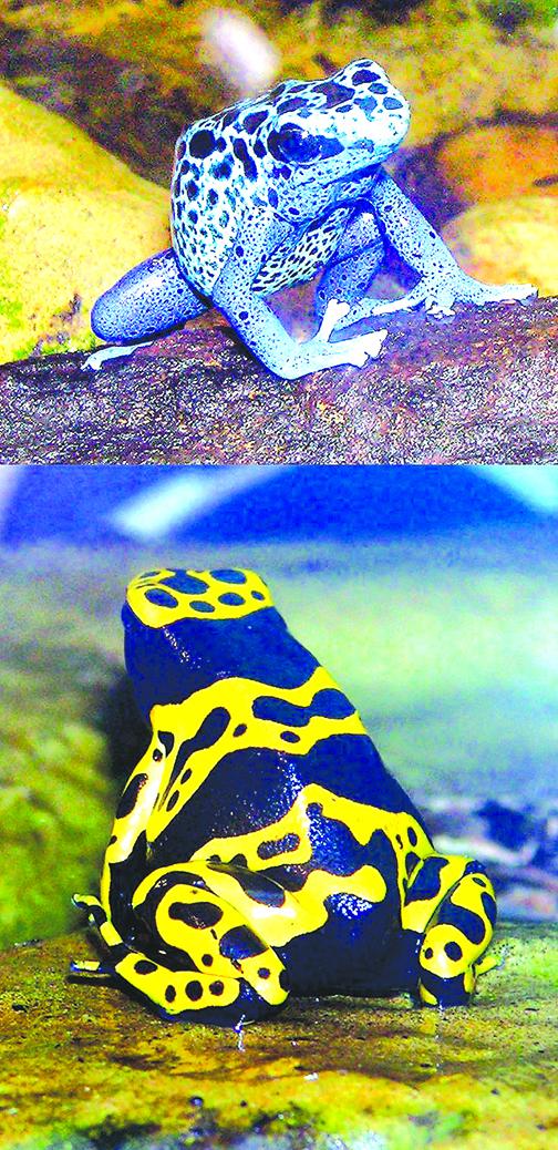 毒蛙體內有一套為其「量身定做」的受體蛋白使其「百毒不攻」。(維基百科)