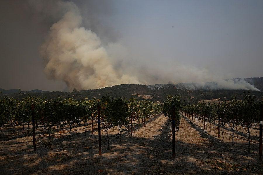 Cal Fire機構的發言人丹・伯蘭特(Dan Berlant)表示,絕大多數釀酒廠和葡萄園受到這些火災影響。(Justin Sullivan/Getty Images)