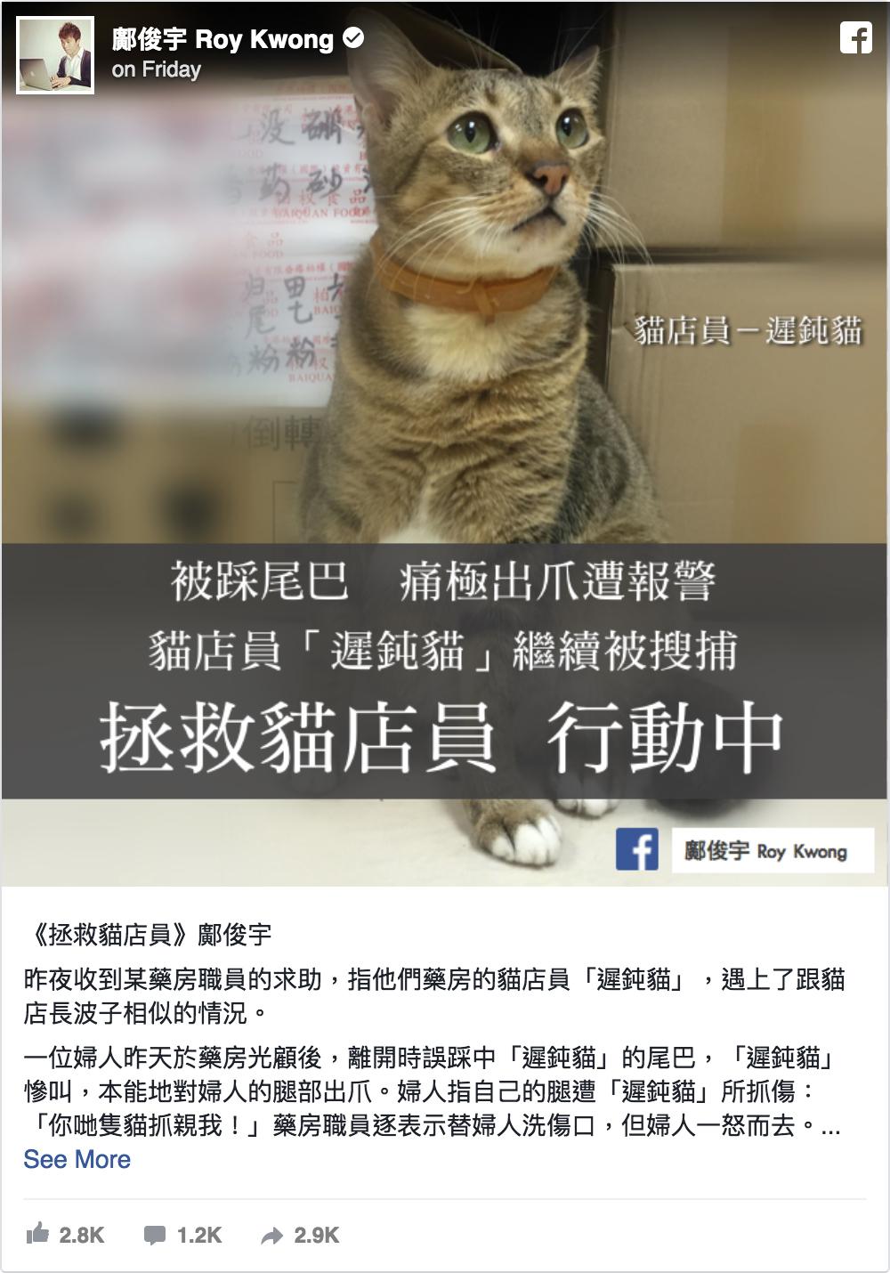 另一隻藥房貓「遲鈍貓」日前因被老婦人踩中貓尾後抓傷人,被漁護署「預約拘捕」中。(鄺俊宇Facebook)