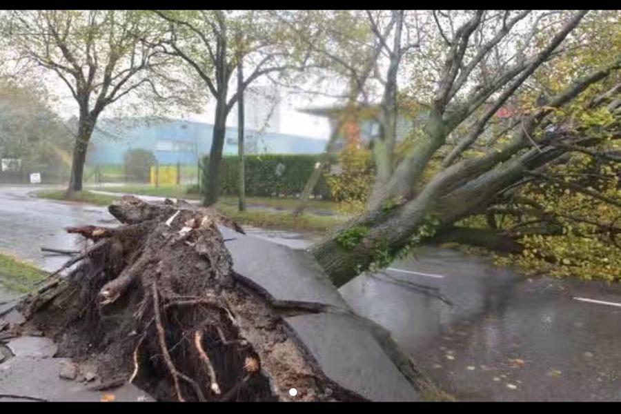 當地時間周一(10月16日)上午,「奧菲利亞」(Ophelia)撲向英國和愛爾蘭,圖為都柏林街頭的大樹被連根拔起。(冬雪/大紀元)