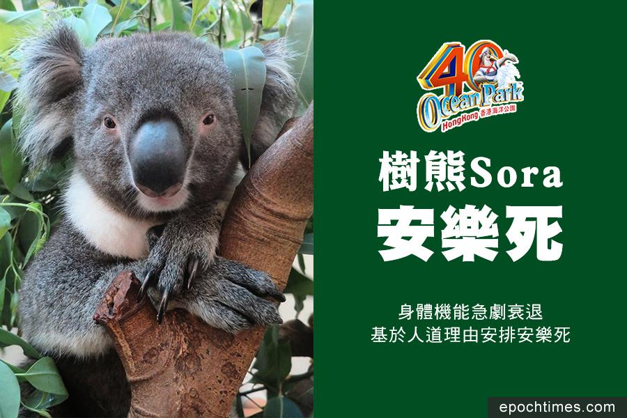 海洋公園樹熊Sora安樂死