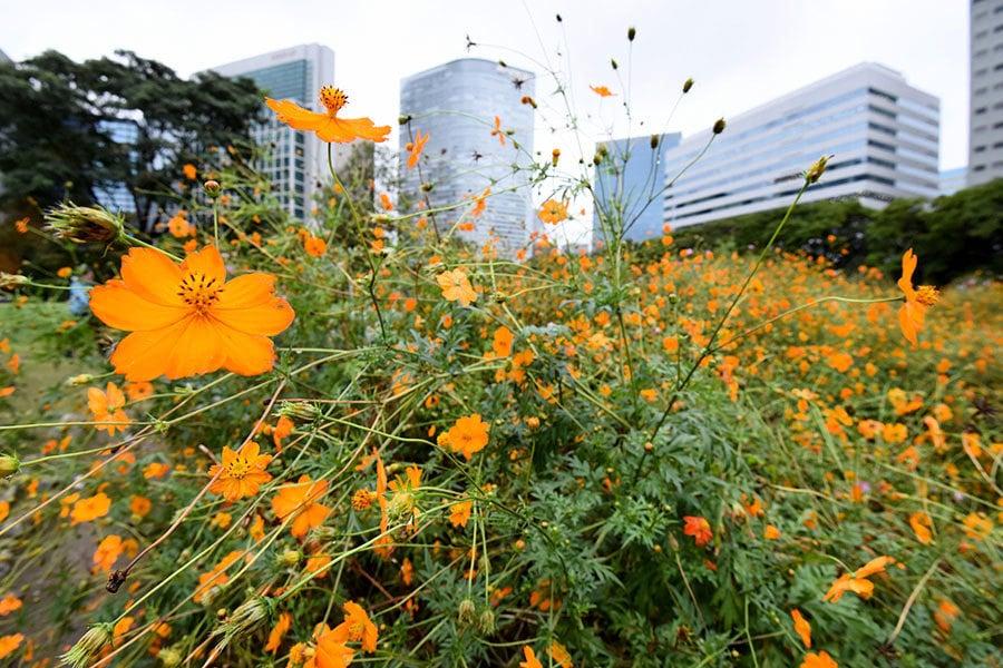 東京的秋天很冬天 首見六十年來低溫