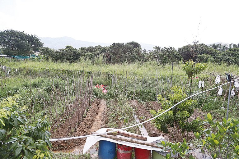 劉達文的三畝多田地,種植了幾十種農作物。(余鋼/大紀元)