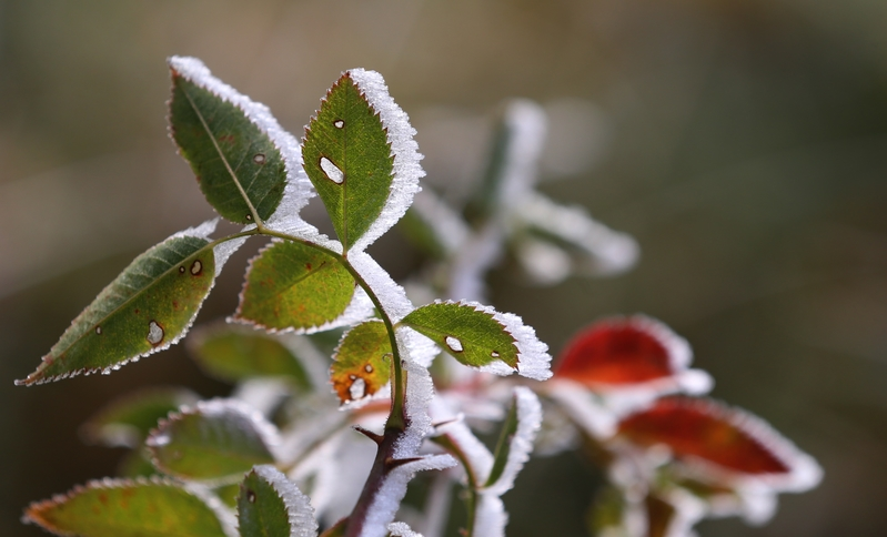 「霜降」向人寒,「歲晚」迎序曲。(KARL-JOSEF HILDENBRAND/AFP/Getty Images)