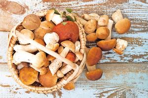 摘採野蘑菇 用對方法不中毒