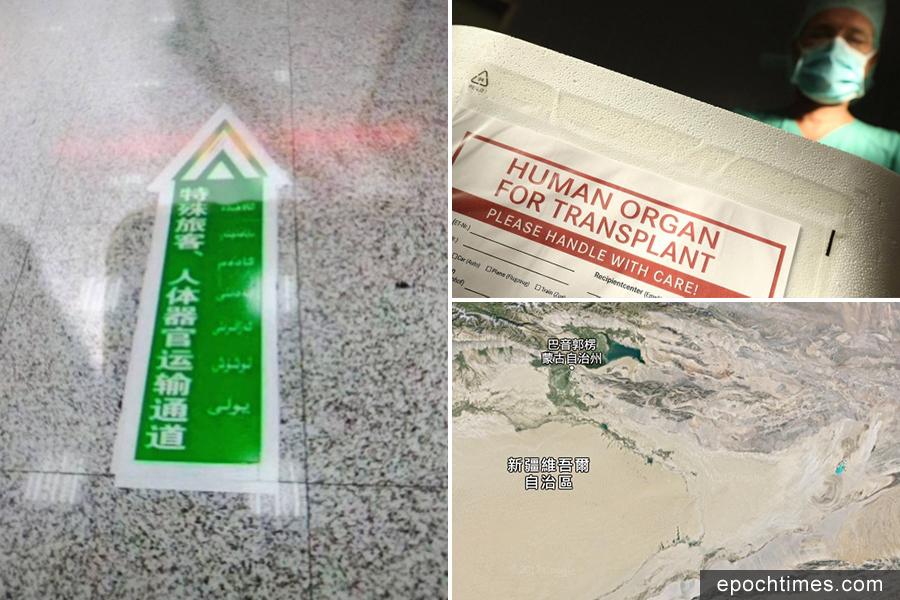 左上:新疆某機場出現為特殊旅客、人體器官運輸專門開闢的快速通道;右上:醫師指出,活摘器官在中國大陸已形成產業;右下:前新疆腫瘤外科醫師安華托帝・博格達指,新疆已成為中共核武化武的試驗場。(安華托帝・博格提供/AFP/陳柏州/大紀元)