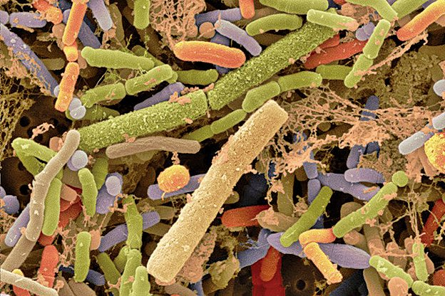 研究發現細菌不僅能對化學信號作出響應,還可以在物理層面上「感知」周圍的世界,即細菌也有觸覺,顛覆以往觀念。 (網絡圖片)