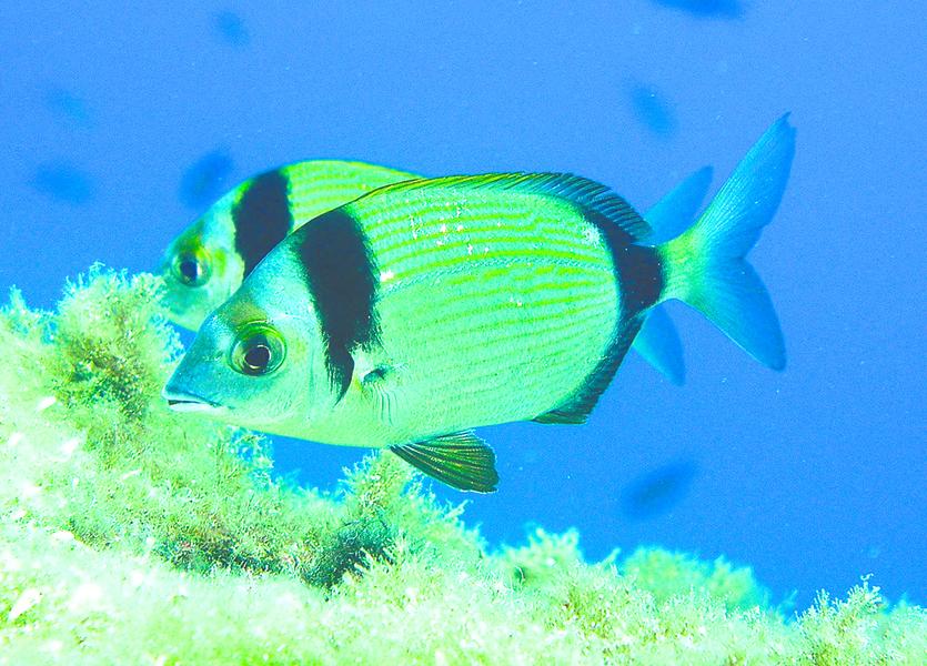 實驗證明:魚也有感情活動