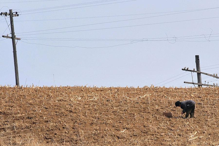 一名北韓農夫在粟米田裏工作。(FREDERIC J. BROWN/AFP/Getty Images)