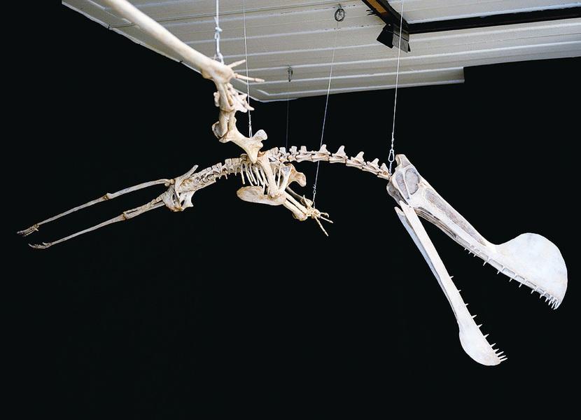 蒙古發現7000萬年前飛行翼龍