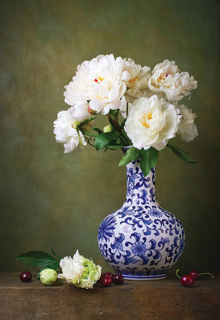 白牡丹花。(Fotolia)