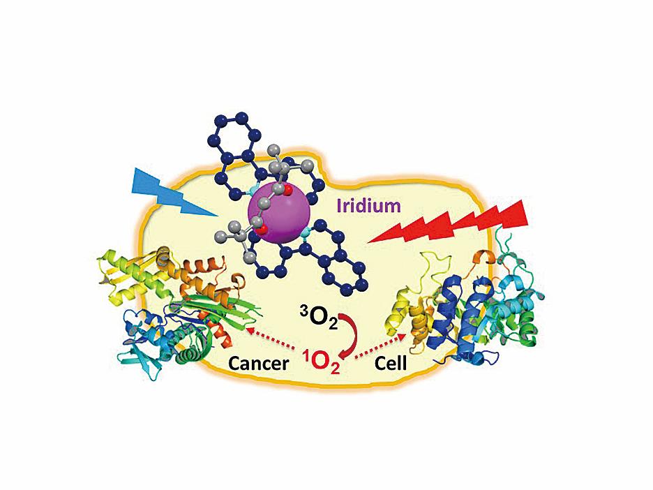 銥化合物攻擊癌症細胞的示意圖。(University of Warwick)