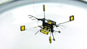 機器蜜蜂能游泳也會飛行