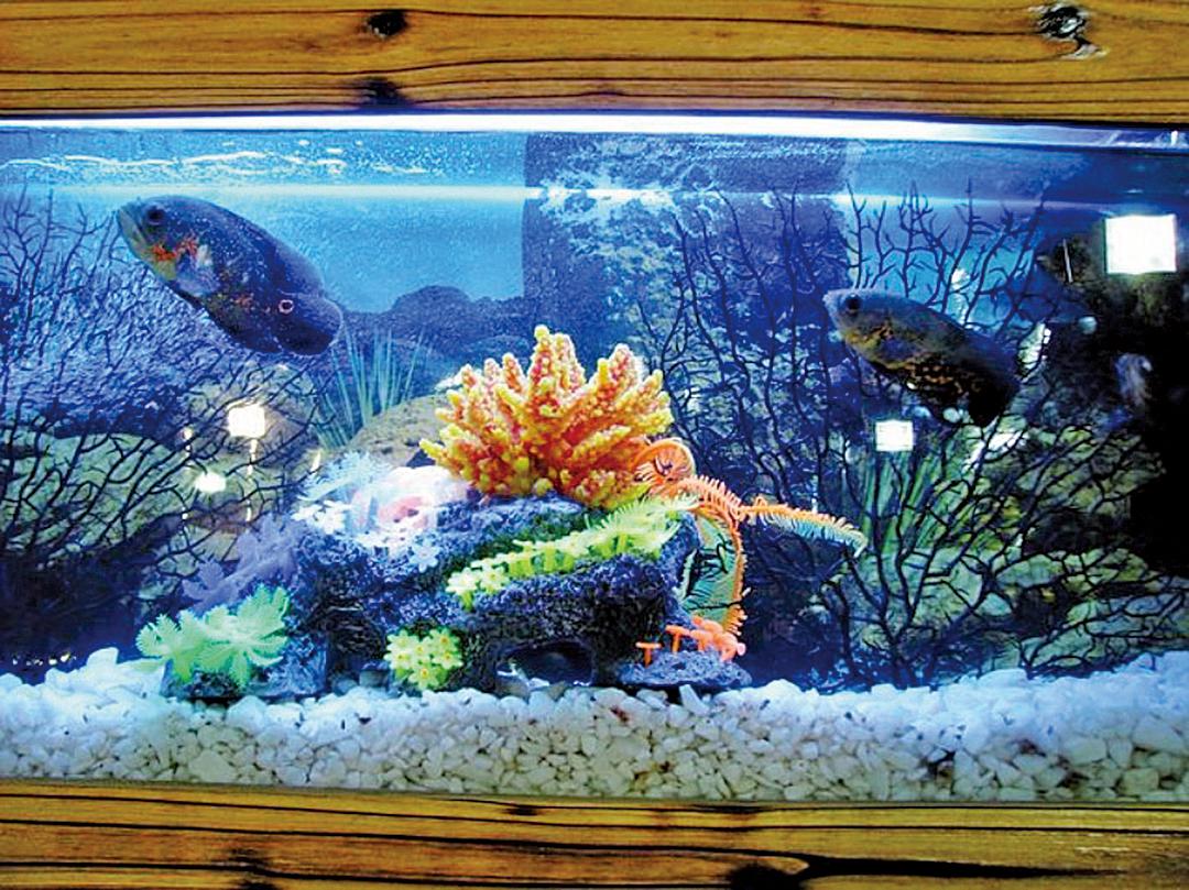 魚缸的供電電路會對Wi-Fi帶來影響外,魚缸裏體積巨大的水還會吸收由路由器發出的Wi-Fi信號。(網絡截圖)