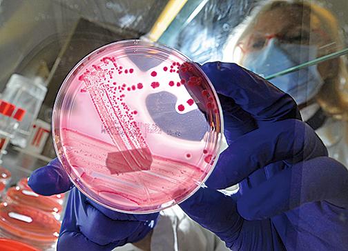 研究發現,細菌有自己的社交網絡形式,使得這些單細胞生物可以相互吸引或排斥。(Getty Images)