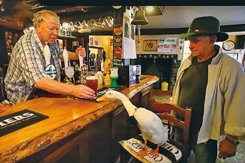 英國這隻鴨子喝醉酒竟然去挑釁狗狗,結果險些丟掉小命。(影片截圖)