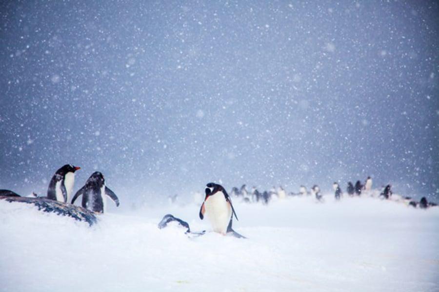 南極(Anne Dirkse/維基百科)