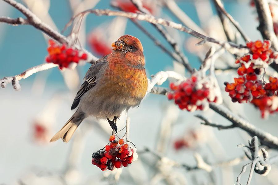 「小雪」是入冬的第二個節氣,此時太陽到達黃經240度,氣溫開始下降,此一時節的養生重點是「養腎氣,溫暖情緒。」(Shutterstock)