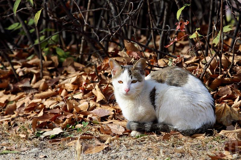 一陣小雪剛過,貓兒也慵懶了。(全景林/大紀元)