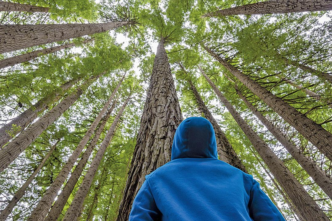 美國神經學家蓋吉(Greg Gage)所進行的實驗證明,植物可藉由電子訊號進行溝通,它們也會算數。圖為一片樹林。(Fotolia)