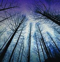 《我願成為山的侍者》書摘 月光森林中的頓悟(1)