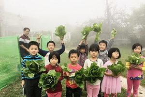 自然農法 學子體驗種菜樂趣