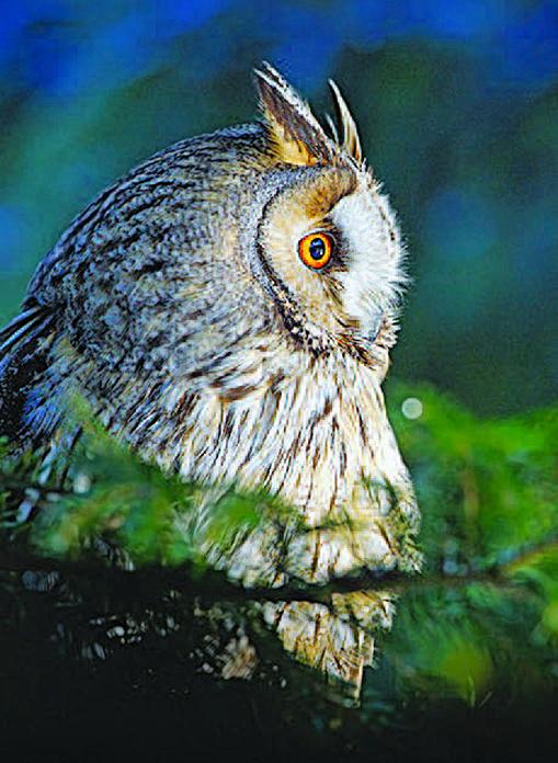 《我願成為山的侍者》書摘 月光森林中的頓悟(2)