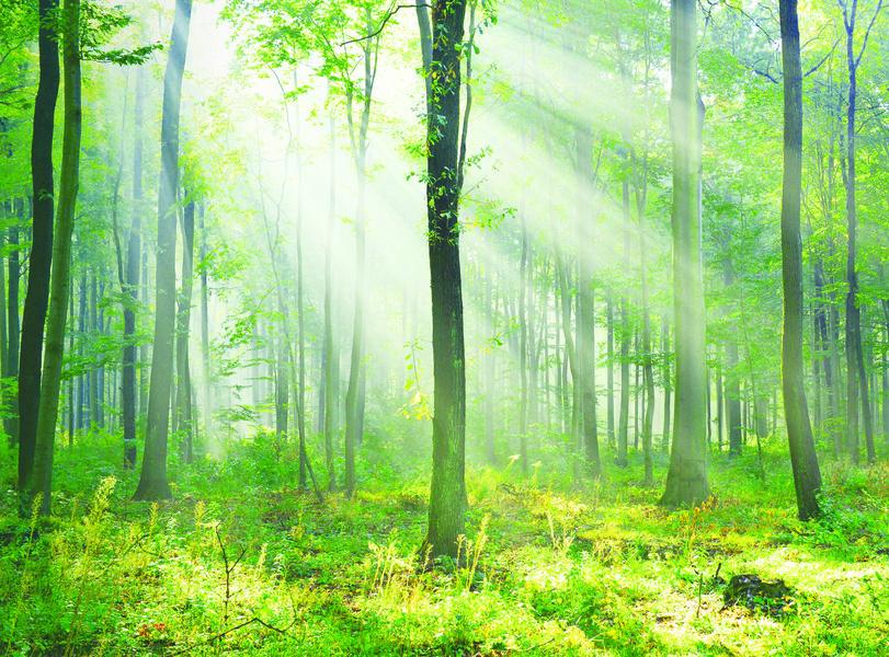 《我願成為山的侍者》書摘 月光森林中的頓悟(3)