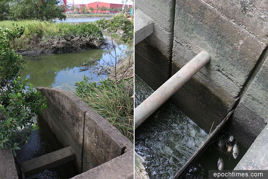 漁塘水閘被颱風破壞,出現多個破洞,加劇塘水外流情況。(陳仲明/大紀元)