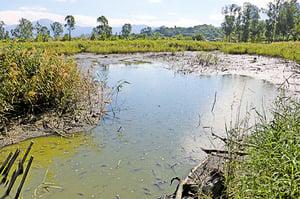 元朗南生圍罕見乾涸 數千魚瀕亡
