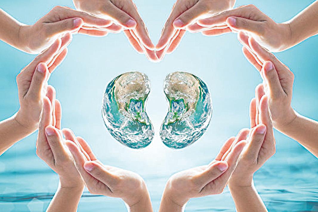 中醫認為,腎是生命之根,先天之本。(Chinnapong/Shutterstock)