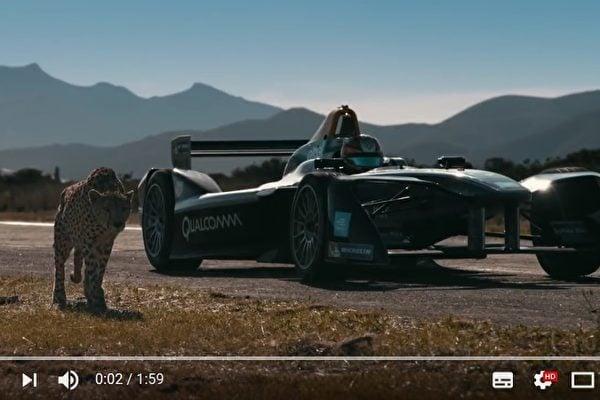 電動方程式賽車和獵豹都能在3秒內從時速0公里加速至100公里。這兩者比賽短跑,何者能獲勝?(視頻擷圖)